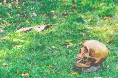 Crânio humano que fuma o cigarro no fundo da grama feito Imagens de Stock