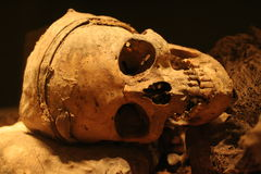 Crânio humano real Fotografia de Stock Royalty Free