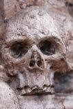 Crânio inoperante Fotografia de Stock Royalty Free