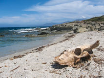 Crânio na areia Imagens de Stock