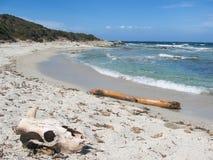 Crânio na areia Foto de Stock Royalty Free