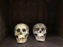 Crânio na caixa de madeira imagem de stock royalty free