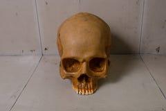 Crânio na imagem suja do assoalho Imagem de Stock