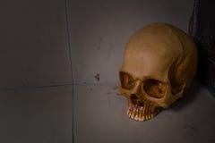 Crânio na imagem suja do assoalho Imagem de Stock Royalty Free