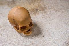 Crânio na imagem suja do assoalho Imagens de Stock Royalty Free