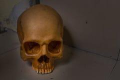 Crânio na imagem suja do assoalho Fotografia de Stock