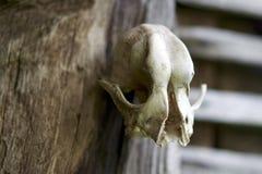 Crânio na parede Imagem de Stock Royalty Free