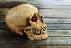 Crânio na tabela de madeira Fotos de Stock Royalty Free