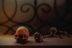 Crânio na tabela de madeira velha Imagens de Stock Royalty Free