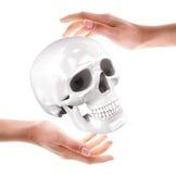 Crânio nas mãos Imagem de Stock