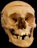 Crânio no backround preto Imagem de Stock