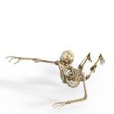 Crânio no branco Fotografia de Stock Royalty Free
