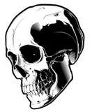 Crânio no fundo branco Imagem de Stock Royalty Free