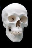 Crânio no preto foto de stock royalty free