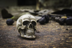 Crânio ou esqueleto da fotografia humana Fotos de Stock