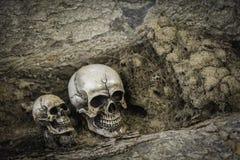 Crânio ou esqueleto da fotografia humana Foto de Stock