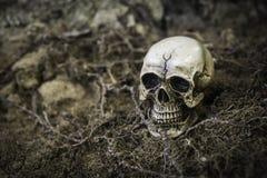 Crânio ou esqueleto da fotografia humana Imagens de Stock Royalty Free