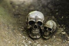Crânio ou esqueleto da fotografia humana Imagens de Stock