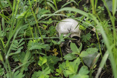 Crânio ou esqueleto da fotografia humana Foto de Stock Royalty Free