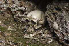 Crânio ou esqueleto da fotografia humana Fotos de Stock Royalty Free