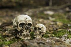Crânio ou esqueleto da fotografia humana Fotografia de Stock