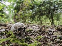 Crânio ou esqueleto da fotografia humana Imagem de Stock Royalty Free