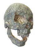 crânio velho do vampiro da ilustração 3D Foto de Stock Royalty Free