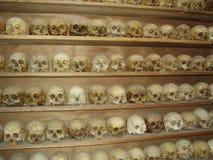 Crânios Imagem de Stock