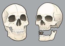 Crânios 02 Imagens de Stock