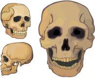 Crânios do vetor ajustados Imagem de Stock Royalty Free