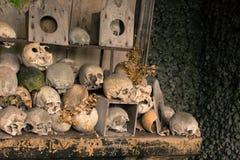 Crânios e ossos Fotografia de Stock Royalty Free