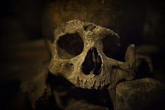 Crânios e ossos em catacumbas de Paris Fotografia de Stock Royalty Free