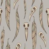 Crânios e penas dos corvos Imagem de Stock Royalty Free