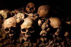 Crânios humanos Foto de Stock