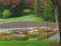 Crèche clôturée de tulipe Photos stock