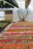 Crèche de serre chaude avec des fleurs Photo libre de droits