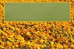 Crèche lumineuse de fleurs avec le calibre ouvert encadré de région de zone de texte Photographie stock