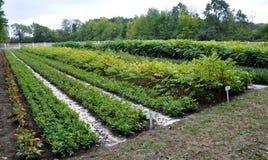 Crèche pour élever plants_27 Photos libres de droits