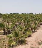 Crèches et arbres image libre de droits