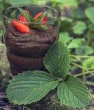 Crème de chocolat avec des fraises images libres de droits