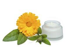 Crème de visage et fleur fraîche de calendula Images libres de droits