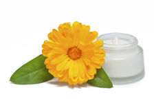 Crème de visage et fleur fraîche de calendula Image stock