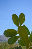 Crète élèvent beaucoup de différents genres de cactus Images libres de droits