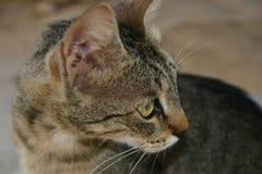 Crète/chat priant pour la nourriture Image libre de droits