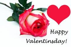 Créateur libre de Saint-Valentin de tir heureux de fleur photos libres de droits