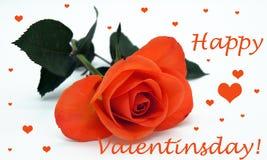 Créateur libre de Saint-Valentin de tir heureux de fleur photos stock