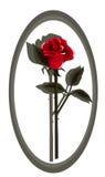 Créateur Rose rouge-foncé Photographie stock libre de droits