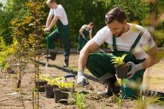 Création d'un beau jardin à partir de zéro Photos stock