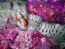 Créature colorée photo stock