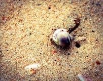 Créature de mer Photo libre de droits